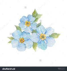 stock-vector-forget-me-not-flowers-isolated-on-white-background-vector-watercolor-hand-drawn-illustration-297911054.jpg (1500×1600)