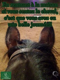 L'odeur du cheval est la meilleure odeur !                                                                                                                                                                                 Plus