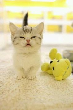 """* * """" I don'ts like dis toy. Day-Glo yellow hurts me eyes and nowz I beez agitated."""""""