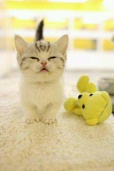 .cute kitty