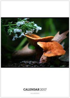 Mushroom Calendar, photography by Nalinne Jones, filled with stunning macro's of mushrooms