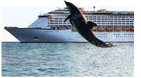 find excursions  http://www.royalcaribbean.com/findacruise/destinations/shoreExcursions/subGateWayByPort/search.do?DestinationCode=CARIB=FMT