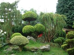 Very Beautiful Home Gardens | beautiful garden showcasing the wide variety of plants one can use