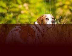 Bijten afleren Puppies, Dogs, Animals, Cubs, Animaux, Doggies, Animales, Pup, Animal