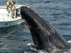 Самые необычные и интересные факты о китах