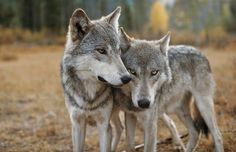 A loving pair