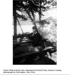 Sylvia Plath, Ted, Poetry, Bloom, Poetry Books, Poem, Poems
