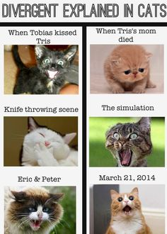 Because why wouldn't you want to describe Divergent using cats? For me the last one would read March Divergent Memes, Divergent Fandom, Divergent Trilogy, Divergent Insurgent Allegiant, Insurgent Quotes, Miraculous Ladybug, Lying Game, Veronica Roth, Funny Cat Memes