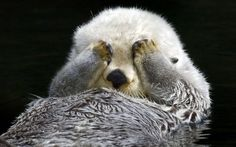 I otter not look.