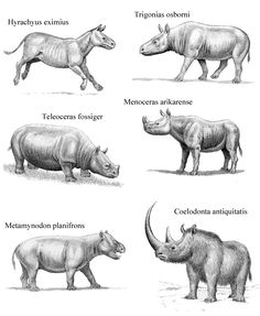 Extinct Rhinos 1 by WillemSvdMerwe on DeviantArt