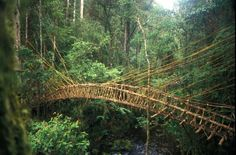 Mountain Bridge, Papua New Guinea Highlands. What a lush green place to visit.