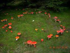 Samhain, Mabon, Nature Aesthetic, Witch Aesthetic, Beltane, Mushroom Fungi, Belleza Natural, Pics Art, New Wall
