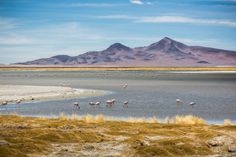 Flamingos at Salar de Tara by Alfred Myers on 500px