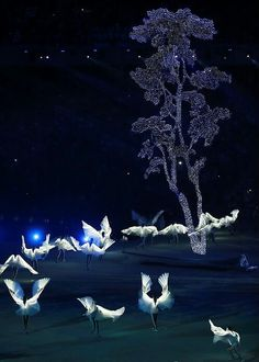 Closing the 2014 Sochi Winter Olympics 2018 Pyeongchang (Korea) I'll see you again in the.