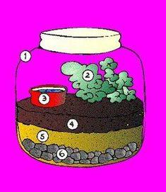 El ciclo del agua en una botella. Interesante experimento para demostrar cómo funciona este ciclo. #conocimientodelmedio #primaria Montessori Science, Kindergarten Science, Teaching Science, Science Activities, Social Science, Science Experiments, Science Room, Science Fair, Science Lessons