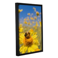 """August Grove Gods Work Framed Photographic Print on Wrapped Canvas Size: 24"""" H x 16"""" W x 2"""" D"""