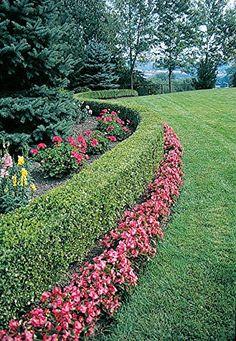 Garden border ideas on pinterest landscaping design for Low maintenance border shrubs