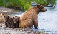 3 марта - Всемирный день дикой природы     #Саратов #СаратовLife