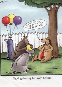 The Far Side Gallery, Gary Larson Cartoons, Far Side Cartoons, Far Side Comics, Math Cartoons, Dog Cartoons, Physics Humor, Engineering Humor, Geek Humor
