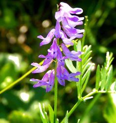 Purple Macro Wild Flower by g. healey on 500px