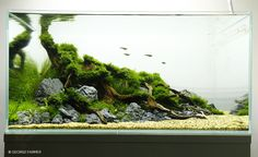 Aquascaping Interview with George Farmer