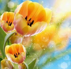 Flores de Primavera 2013 3