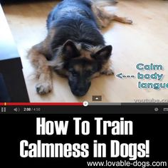 How To Train Calmness in Dogs
