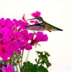 Lovely multi colored hummingbird