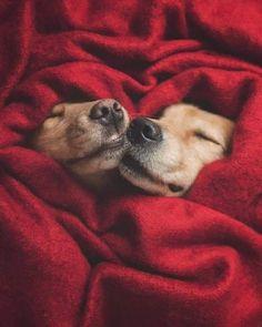 Fun Dogs - Devu - Your Magazine Cute Funny Animals, Funny Cute, Funny Dogs, Funny Memes, Cute Puppies, Cute Dogs, Dogs And Puppies, Really Funny Dog Videos, Selfies