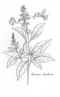 black and white botanical art Botanical Line Drawing, Botanical Tattoo, Botanical Drawings, Botanical Art, Peacock Tattoo, Peacock Art, Herbs Illustration, Botanical Illustration, Digital Illustration