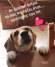 Greek Words, Loving U, Labrador Retriever, Funny, Quotes, Animals, Cutest Animals, Greek Sayings, Labrador Retrievers