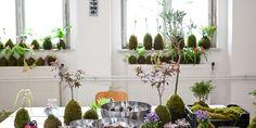 Kokedama : Un art à mi-chemin entre le bonsaï et l'art floral !