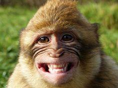 Haben Tiere tatsächlich Humor? — Bild: Shutterstock / Gabi Siebenhuehner    www.einfachtierisch.de