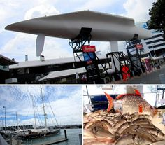 Itinerary : 2 days to visit Auckland and its surrounding area | Auckland harbour : america's cup KZ1 and fish market