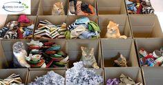 Types of hoarding