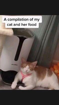 Cute Little Kittens, Kittens Cutest, Cats And Kittens, Cute Cats, Funny Cats, Funny Animal Videos, Funny Animal Pictures, Cute Funny Animals, Animal Memes