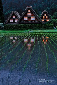 Shirakawa, Gifu, Japan | Naomi Sugitani 白川村