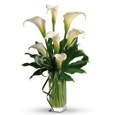 Flowers in Season for April: Calla Assorted