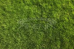 Perfect Green Grass Background or Texture Stock Photo by Katrina Brown Green Grass Background, Edc Everyday Carry, Edc Gear, Lawn Care, Royalty Free Stock Photos, Herbs, Texture, Landscape, Brown