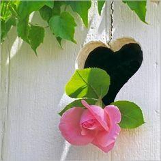 Fleur au volet  par Lou GRIVE  Carte de voeux Nouvelles Images