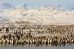 Peaks & Penguins in Antarctic Sunrise Georgia del Sur