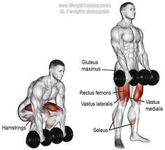 Dumbbell deadlift. A compound push exercise. Muscles worked: Gluteus Maximus, Erector Spinae, Hamstrings, Adductor Magnus, Quadriceps, and Soleus.