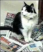 Humphrey - As a one-year-old stray, Humphrey served as Chief Mouser to the Cabinet Office at 10 Downing Street under the premierships of Margaret Thatcher, john Major, and Tony Blair. He was frequently referred to in jest by the press as an actual employ at Number 10. He retired 6 months after the Blairs moved in to Downing Street.