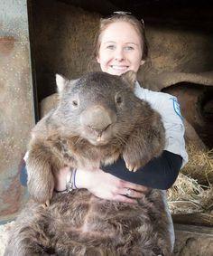 cool-giant-wombat-girl