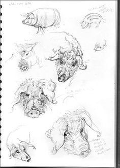 Mangalitza sketches from Brian's pigs