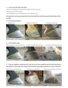 How to look inside a hoof: see how healthy your horse's feet are!