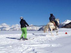 Ski Joëring à l'Espace Mont-Noble à Nax, Val d'Hérens, Valais Ski, Camel, Animals, Outer Space, Animales, Animaux, Skiing, Animal Memes, Animal