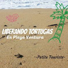 Libera tortugas en Playa Ventura, Guerrero - México.