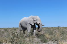 Elephant, Animals, Photos, Travel Tips, Africa, Landscape, Animales, Animaux, Animal