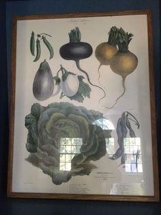 5 framed Vilmorin-Andrieux & Cie vegetable prints